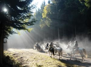chevaux520_386